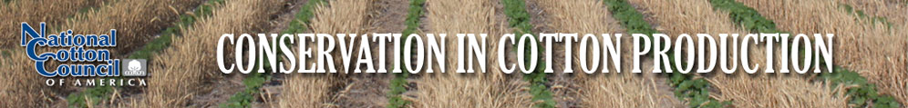 Conservation Programs in Cotton