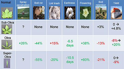 Impact of major leaf shapes in cotton, relative to normal leaf shape genotypes, on cotton production.